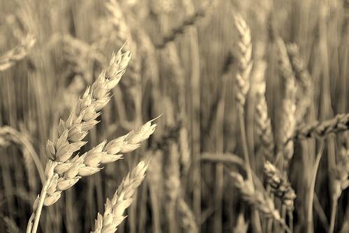 Situationen för lantbruket långt värre än vad som tidigare varit känt.