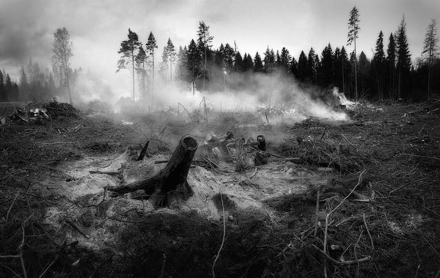 Vägen fram till skogsbränderna är kantad med medvetna politiska beslut
